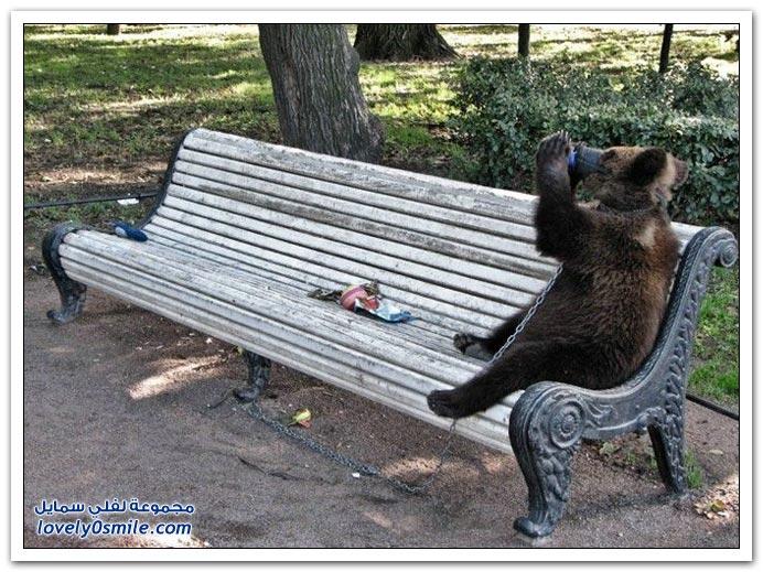 صور أنواع الدببة حول العالم Bears-84