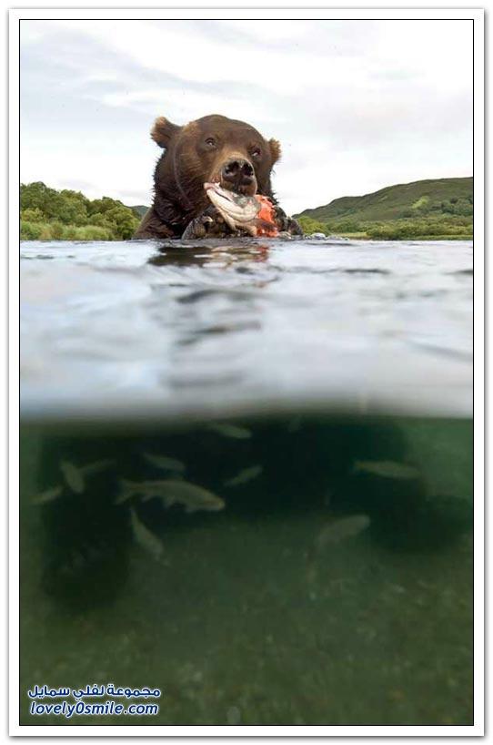صور أنواع الدببة حول العالم Bears-85