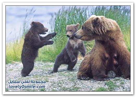 صور أنواع الدببة حول العالم Bears-86