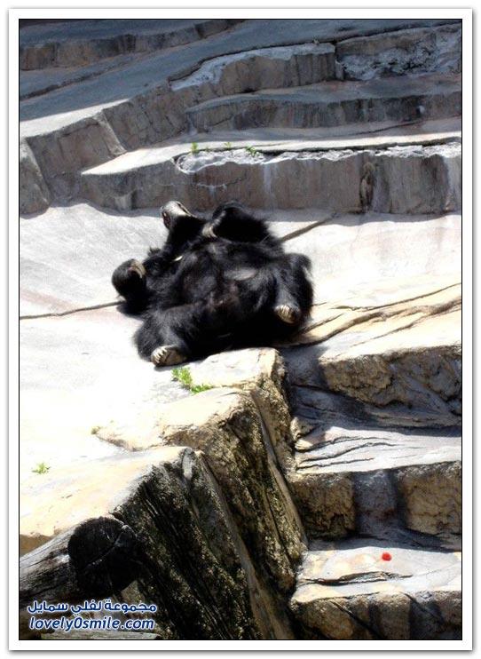 صور أنواع الدببة حول العالم Bears-87