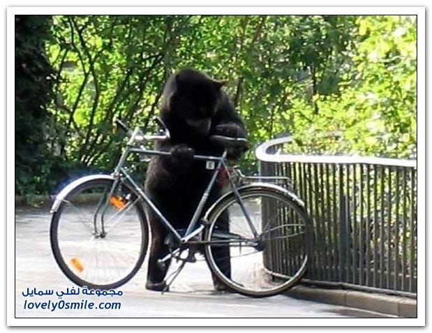 صور أنواع الدببة حول العالم Bears-88