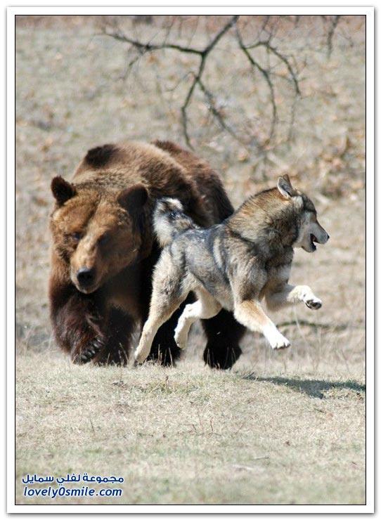 صور أنواع الدببة حول العالم Bears-89