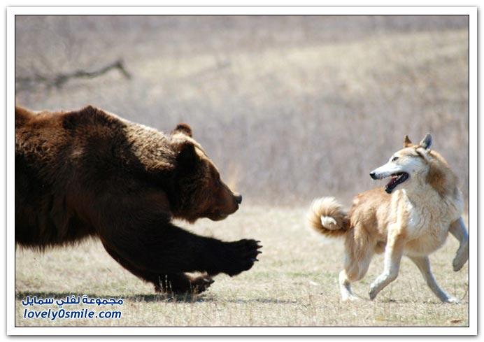 صور أنواع الدببة حول العالم Bears-90