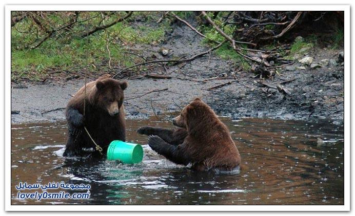 صور أنواع الدببة حول العالم Bears-93