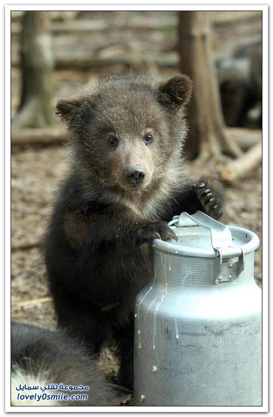 صور أنواع الدببة حول العالم Bears-96