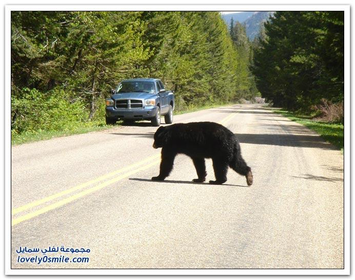 صور أنواع الدببة حول العالم Bears-98