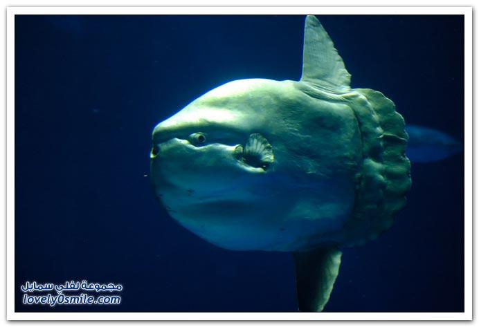 صور سمكة غريبة Strange-fish-02