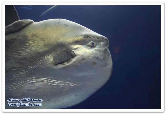 صور سمكة غريبة Strange-fish-04