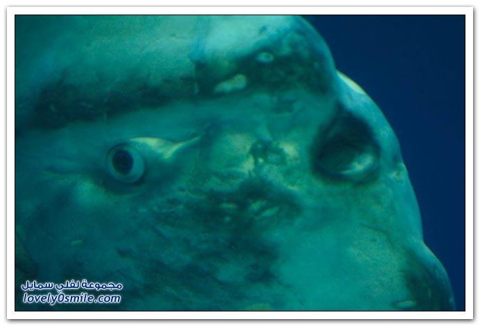 صور سمكة غريبة Strange-fish-05