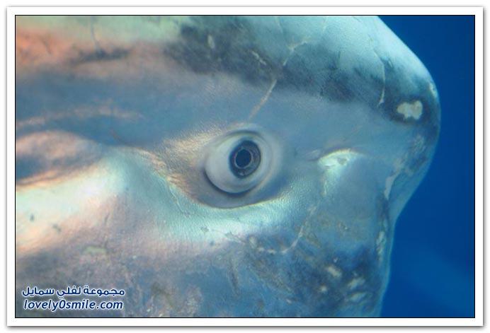 صور سمكة غريبة Strange-fish-06