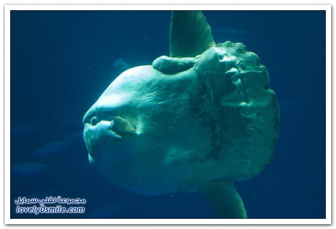 صور سمكة غريبة Strange-fish-07
