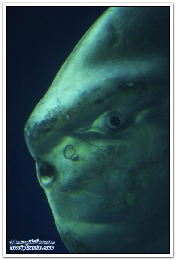 صور سمكة غريبة Strange-fish-08