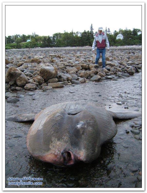 صور سمكة غريبة Strange-fish-09