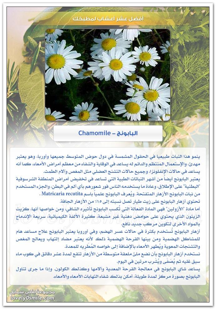 أفضل عشر أعشاب لمطبخك TopHerbsForYourKitchen-04