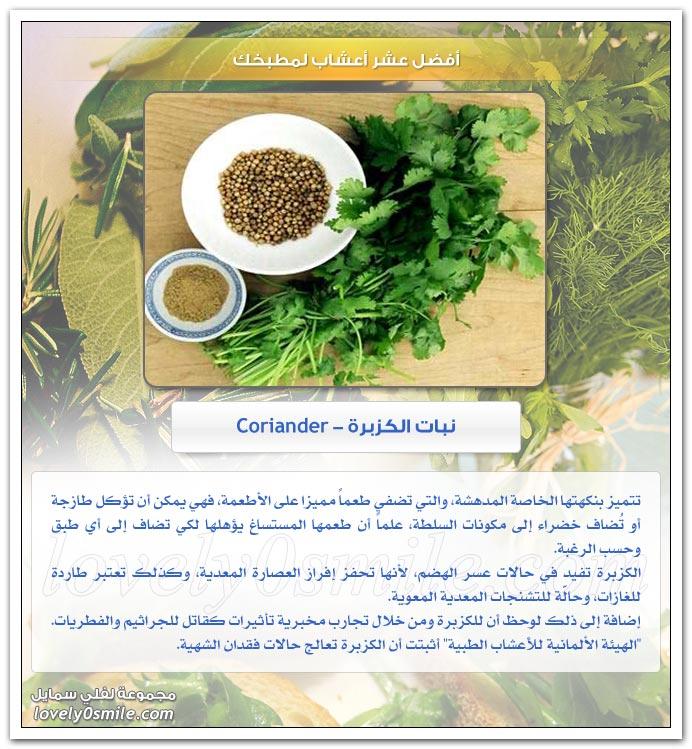 أفضل عشر أعشاب لمطبخك TopHerbsForYourKitchen-07