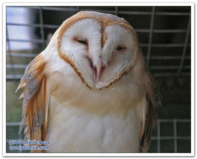 ما سبب التشائم من طائر البوم?! Smile-Owl-22