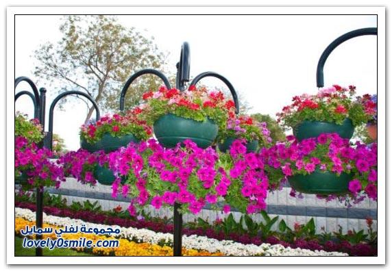حديقة العين بارادايس في الإمارات التي دخلت موسوعة غينيس Hanging_flowers_09