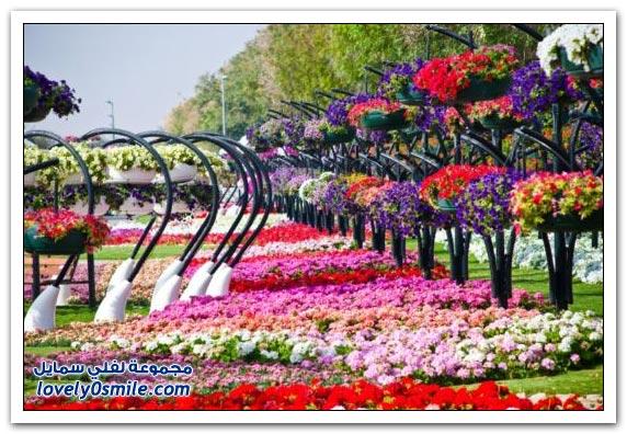حديقة العين بارادايس في الإمارات التي دخلت موسوعة غينيس Hanging_flowers_13