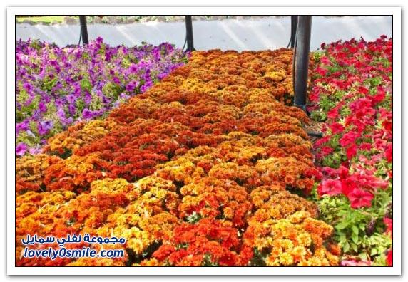 حديقة العين بارادايس في الإمارات التي دخلت موسوعة غينيس Hanging_flowers_18
