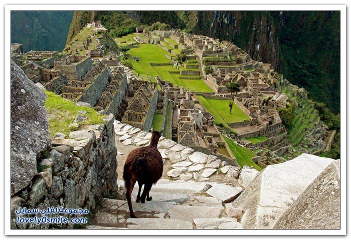 المدينة المفقودة مدينة ماتشو بيتشو لشعب الإنكا في البيرو Machu-Picchu-city-of-the-Inca-people-in-Peru-15