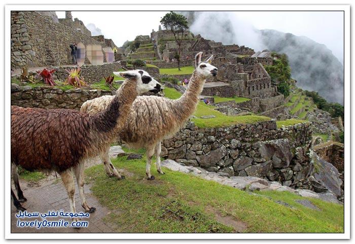 المدينة المفقودة مدينة ماتشو بيتشو لشعب الإنكا في البيرو Machu-Picchu-city-of-the-Inca-people-in-Peru-23