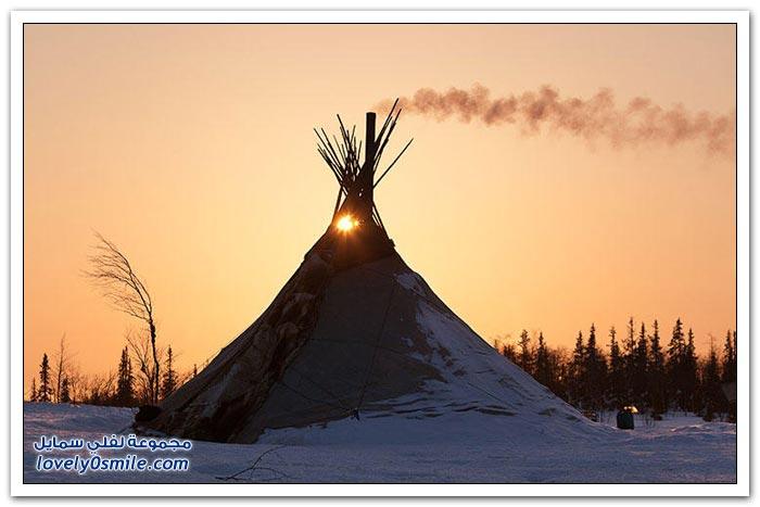 مخيم الغزلان في التندرا في القطبية الشمالية Deer-camp-in-the-Arctic-tundra-01