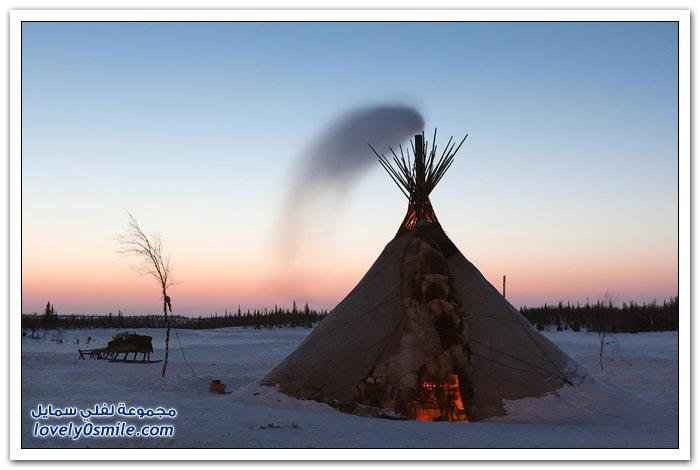 مخيم الغزلان في التندرا في القطبية الشمالية Deer-camp-in-the-Arctic-tundra-02