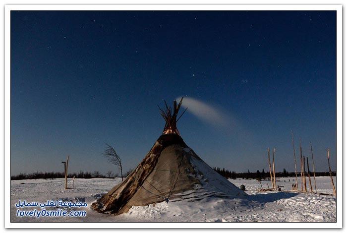 مخيم الغزلان في التندرا في القطبية الشمالية Deer-camp-in-the-Arctic-tundra-03