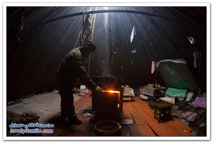 مخيم الغزلان في التندرا في القطبية الشمالية Deer-camp-in-the-Arctic-tundra-13