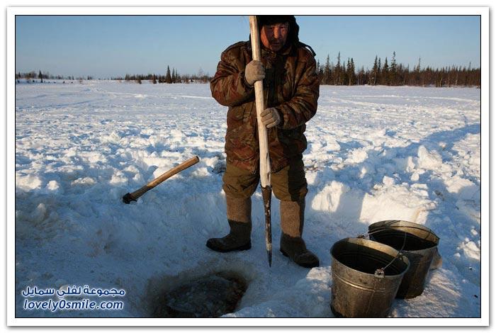 مخيم الغزلان في التندرا في القطبية الشمالية Deer-camp-in-the-Arctic-tundra-15