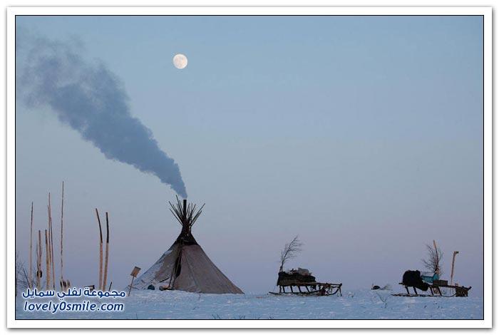مخيم الغزلان في التندرا في القطبية الشمالية Deer-camp-in-the-Arctic-tundra-16