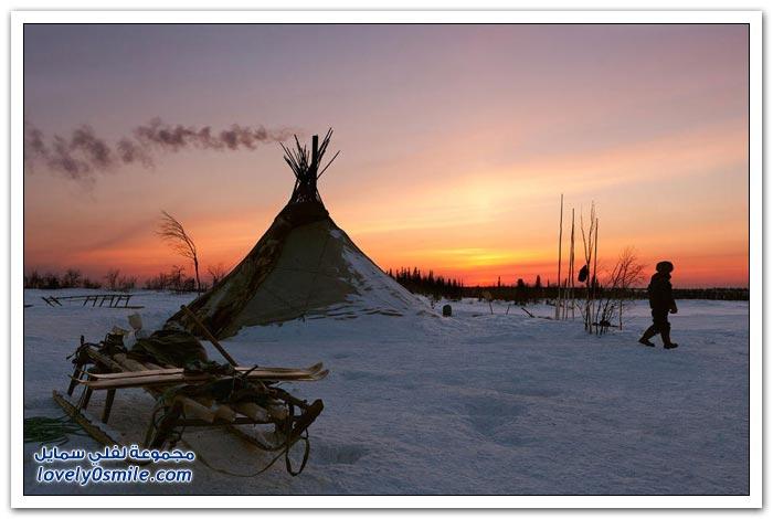 مخيم الغزلان في التندرا في القطبية الشمالية Deer-camp-in-the-Arctic-tundra-37