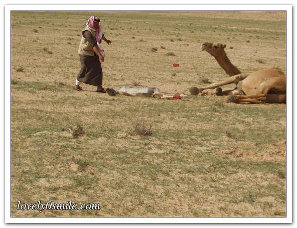 تأمل روعة الخالق - صور عجيبة Camel-delivery-04