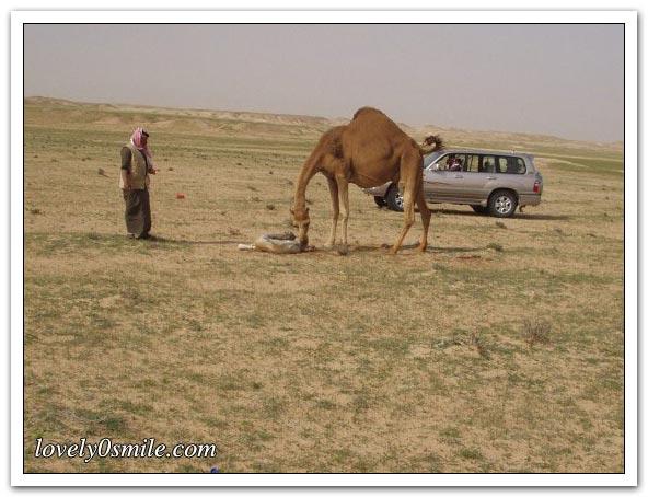 تأمل روعة الخالق - صور عجيبة Camel-delivery-06