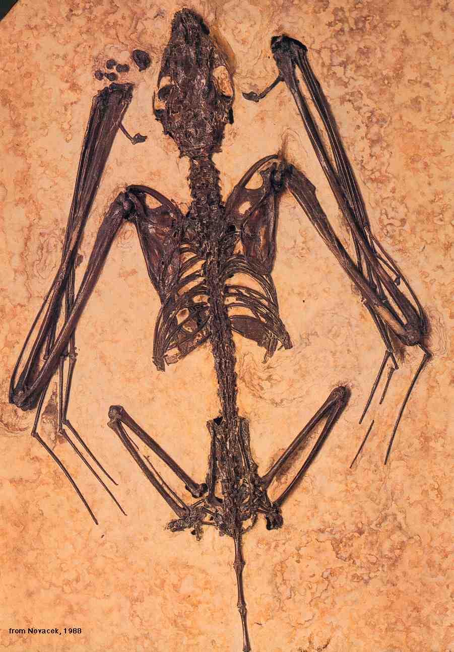 Fossil    الأحفورة    ..... الأحافير  143