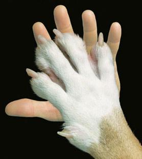 Proverbi e Modi di Dire con gli  Animali tra Verità e Leggenda Animal