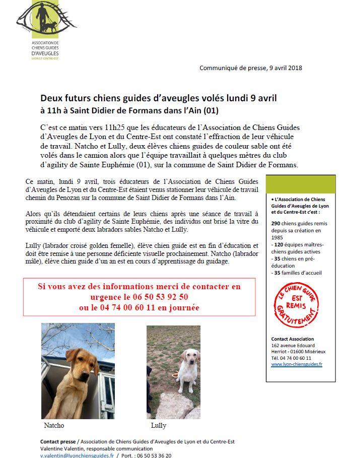 2 futurs chiens guides (labradors sables) RETROUVÉS Communiqu%C3%A9-chiens-vol%C3%A9s