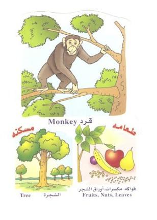 الحيوانات بالعربي والانجليزي  0514101805075lxy2hftp4d8noat