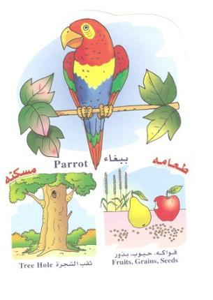 الحيوانات بالعربي والانجليزي  0514101805075ssstrnac0hi