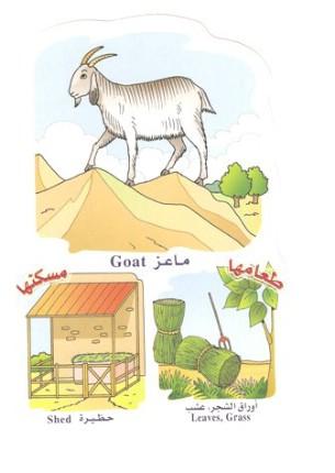 الحيوانات بالعربي والانجليزي  05141018050772765izghkvgf