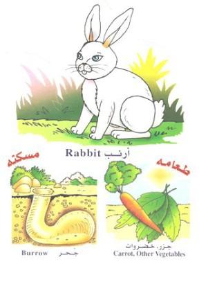 الحيوانات بالعربي والانجليزي  0514101805077eveagmzzj7k6fm8km