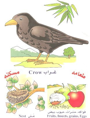 الحيوانات بالعربي والانجليزي  051410180507fu7x9784l0