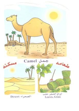 الحيوانات بالعربي والانجليزي  051410180507jn0r72b4iu
