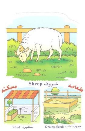 الحيوانات بالعربي والانجليزي  051410180507n8i7laa