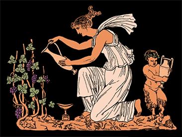 Istorija bilja  Grcka-366