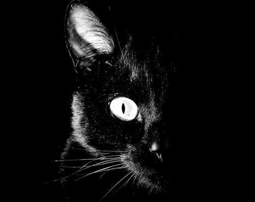 В доме чёрная кошка. Приметы 01