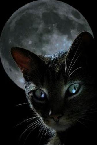 В доме чёрная кошка. Приметы 02