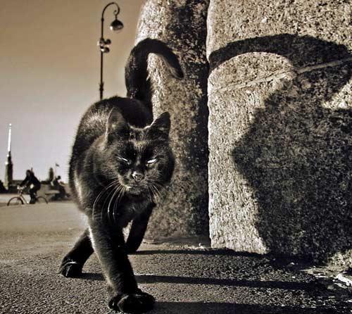 В доме чёрная кошка. Приметы 03