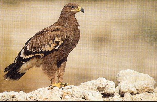 صور لطائر النسر , صور جميلة للنسور 122_2_1028636342