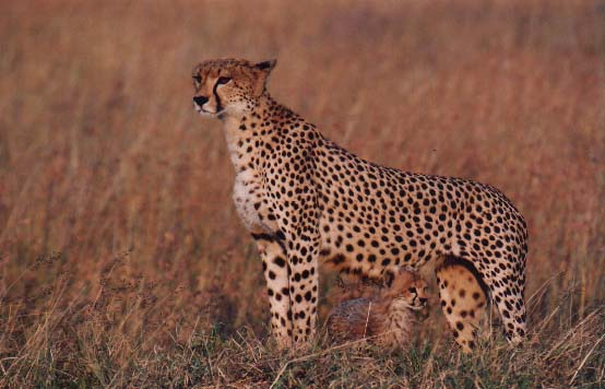 ملف عن تربية القطط  وبعض الحيوانات الاخرى  25_2_1058319974